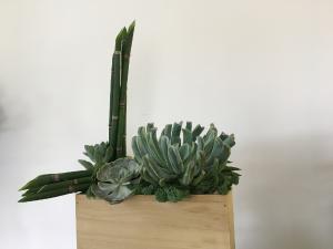 Spirit of Zen Too Succulent Plants in Norway, ME | Green Gardens Florist & Gift Shop