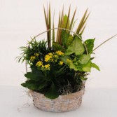 Splash of Sunshine Foliage Basket