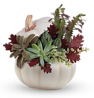 Spooky Succulent Garden Plants