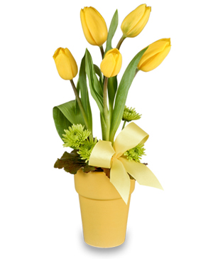 SPREAD THE JOY Tulip Arrangement in Edmonton, AB | PETALS ON THE TRAIL