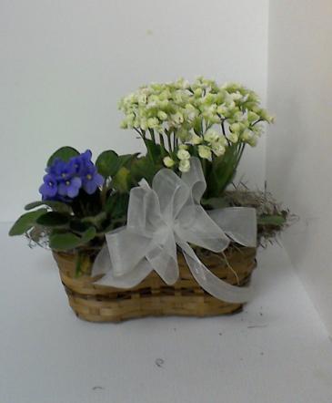 Spring Basket Blooming plant