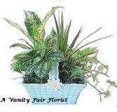 Spring Basket Planter Plant