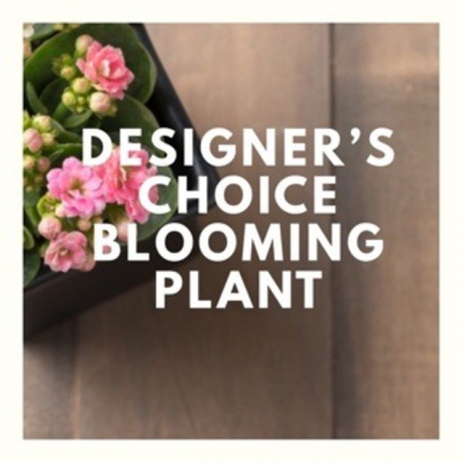 Spring Blooming Plant