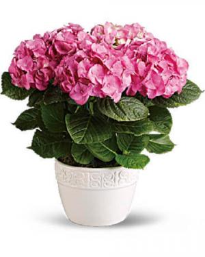 Beautiful Spring Blooming Plant *Designer Choice* in Arlington, TX | Erinn's Creations Florist