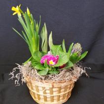 Spring Bulb Dish Garden