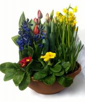 Spring Bulb Garden
