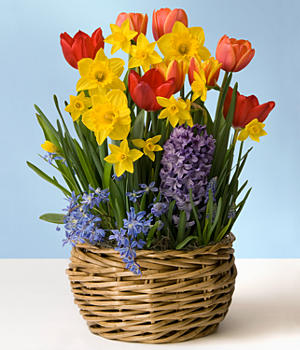 Spring Bulb Garden of Spring Flowers *Containers / flowers may vary in Lebanon, NH | LEBANON GARDEN OF EDEN FLORAL SHOP