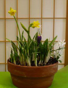 Spring Bulb Garden Forced Bulbs