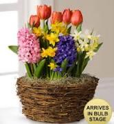 Spring Bulb Garden Plant Basket