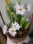 Spring Bulb Garden Plants