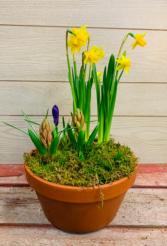 Spring Bulb Garden  SPRING SPECIAL