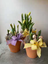 Spring Bulb Pot