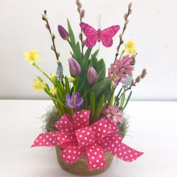 Spring bulb pot planter basket