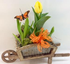Spring Bulb Wheelbarrow Special!!! LAST ONE!!! in Troy, MI | DELLA'S MAPLE LANE FLORIST
