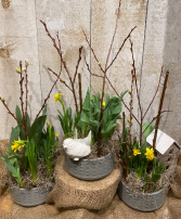 Spring bulbs planter  in ceramic container