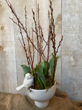 Spring bulbs with pussy willow in planter