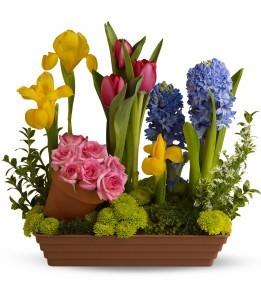 Spring Favorites H149