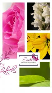Spring Fever Arrangement in Houston, Texas | EXOTICA THE SIGNATURE OF FLOWERS