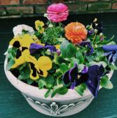 Spring flower planter flowering plants outdoors