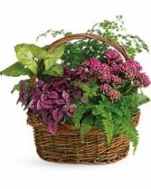 Spring Garden Basket Plant
