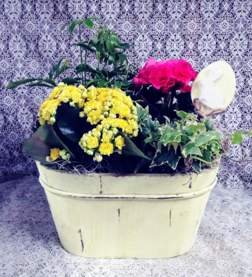 Spring Garden Blooming & Green Plants