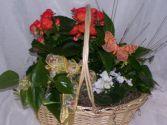 Spring Garden European Dish Gardern