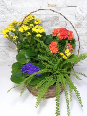 Spring Has Sprung Basket in Largo, FL | Rose Garden Florist