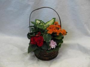 Spring Has Sprung Flowering Garden Abloom Original in Walkersville, MD | ABLOOM LTD