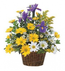 Spring has sprung basket Basket Arrangement