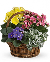 Spring has sprung basket plants