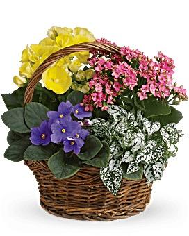Spring has sprung basket plants