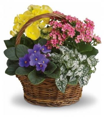 Spring Has Sprung  Blooming Plant Basket