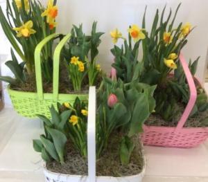 Spring has Sprung  Bulb Garden in Troy, MI | DELLA'S MAPLE LANE FLORIST