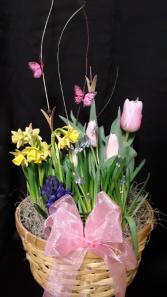 Spring has Sprung bulb garden