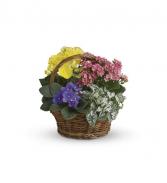 Spring Has Sprung Flowering Indoor Plants