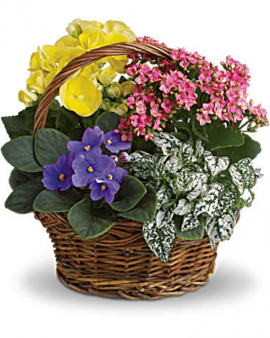 Spring Has Sprung Mixed Plant Basket in Croton On Hudson, NY | Cooke's Little Shoppe Of Flowers