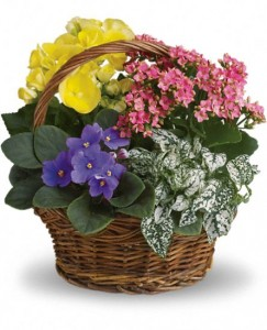 Spring has sprung t93 1a basket of blooming potted plants in white spring has sprung t93 1a basket of blooming potted plants mightylinksfo Image collections
