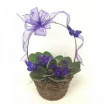 Spring Into Violets