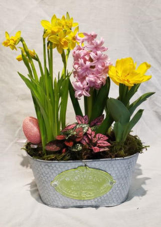 Spring is Here! Spring bulb planter