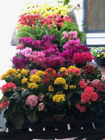 Spring Just Arrived!! Assorted Blooming Basket