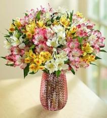 Spring Peruvian Lilies: 50-100 Blooms  Fresh Arrangement
