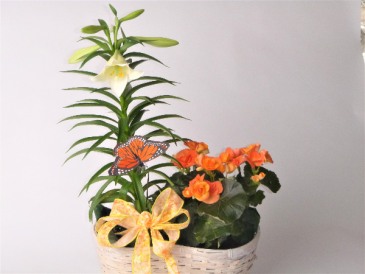 Spring Plant duo Peanut basket