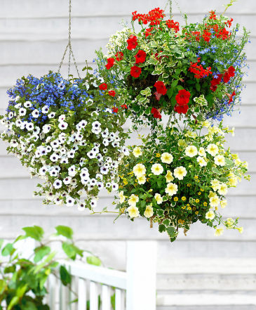 Spring Season Hanging Basket Colors Will Vary
