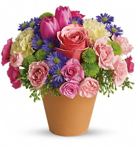 Spring Sonata - 147 Arrangement