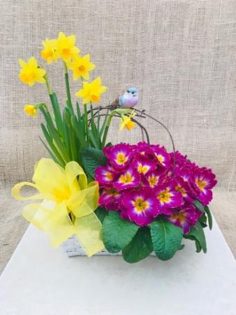 Spring Song European Dish Garden