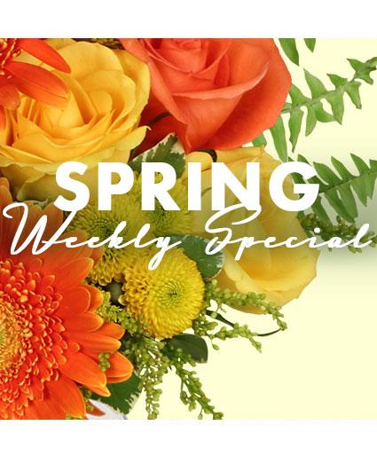 Spring Special Designer's Choice