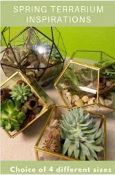 Spring Terrariums Plants