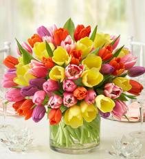 Spring Tulip Deluxe Arrangement