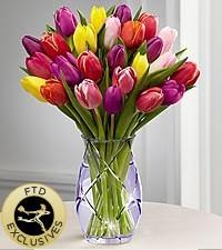 spring tulip Spring Flowers