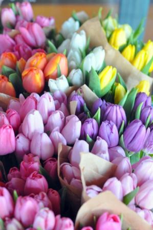 Spring Tulips ✨  in Osoyoos, BC | POLKA DOT DOOR